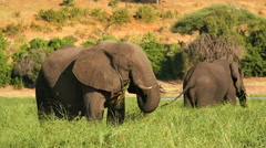 Chobe National Park boat motion Africa wildlife elephant - stock footage