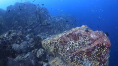 Amazing coral reef rocky drift - stock footage