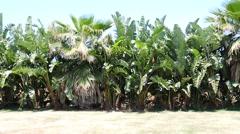 Tropical garden in villa. Sicily - stock footage