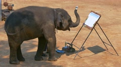 Maesa Elephant Camp, Chiang Mai, Thailand Stock Footage