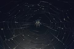 Close-up of spider on web Stock Photos