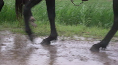Horse hooves walk in the mud and rain - stock footage