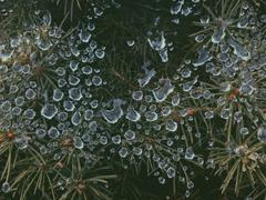 Raindrops and Spiderwebs Stock Photos