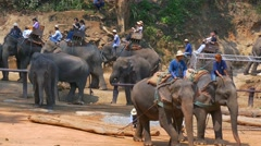 Maesa Elephant Camp, Chiang Mai, Thailand Stock Footage