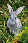 Adorable bunny - stock photo