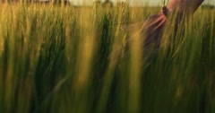 Close-up of woman's hand running through wheat field, dolly shot. Slow motion Stock Footage