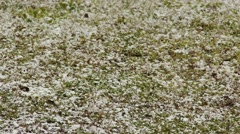4K Snowing onto Grass in Winter 2 fast shutter Stock Footage