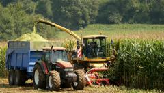 thresher and tractor with trailer harvesting  corn as livestock feed and silage - stock footage