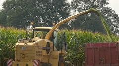 Corn or maize harvesting for livestock feed Stock Footage