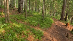 Walking trail in the coniferous forest. Russia. 1280x720 - stock footage