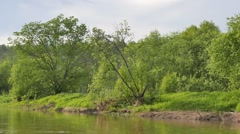 The tree on the bank of the river Serga. Russia. 1280x720 Stock Footage