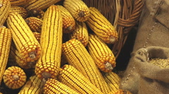 Harvested Corn Ears in Wicker Basket Stock Footage