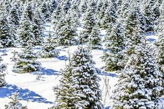 White winter wonderland landscape - stock photo