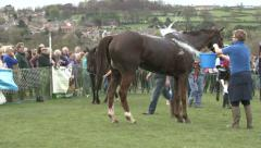Racehorses in the winner's enclosure. Stock Footage