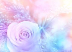 Gentle rose background Stock Photos