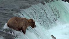 Brown Bear Almost Catches Salmon - Variable Slow Motion Stock Footage