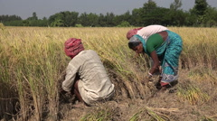 Indian farmers at work Stock Footage