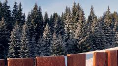 Beautiful spruces in the snow with a wooden fence in the foreground. - stock footage