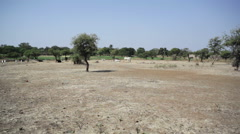 Herding livestock across dry drought land, long shot Stock Footage