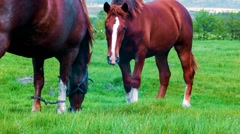 Two Horses Standing And Staring At The Camera Stock Footage