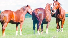 Horses Standing And Staring At The Camera Stock Footage