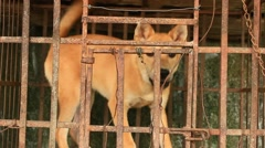 Dog in cage Stock Footage