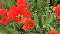 4K insect pov fly to single flower. UHD crane shot stock video - stock footage