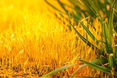 detail yellow moss and green grass - stock photo