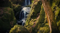 Beautiful Forest Waterfall In The Evening Stock Footage