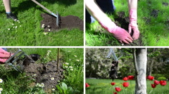 Fighting mole rodent with trap in garden. Footage clips collage. Stock Footage