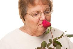 Attractive Senior Woman with Red Rose Isolated on a White Background. Stock Photos