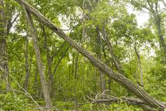 Fallen Tree Woods Stock Photos