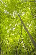 Treetops Reaching Sky Stock Photos