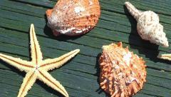 Sea Shells on Wood Pier Stock Footage