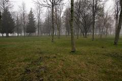 trunks of trees - stock photo