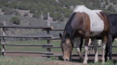 Horses by ranch fence Stock Footage