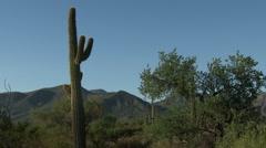 Desert pan of saguaro cacti & mountain - stock footage