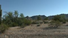 Trucking of saguaro cacti 2 - stock footage