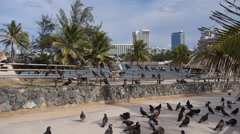 Pigeons on handrail at Escambron Beach - San Juan - Puerto Rico. Stock Footage