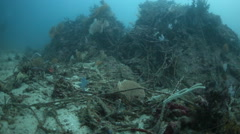 Coral reef destroyed by fishing net Stock Footage