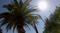 Red Wevil Control Palm Tree Cleaning Timelapse Stock Footage