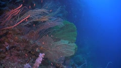 Huge sea fans on a colorful coral reef Stock Footage