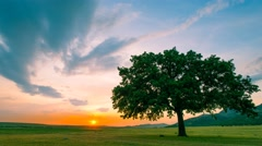 Time lapse near an old oak at sunset - stock footage