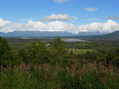 Stock Photo of Greenery, Background Mountains - Alaska
