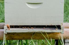 Beekeeping box close up Stock Photos