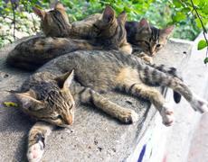 Closeup of  beautiful cats Stock Photos