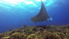 Manta Ray in cleaning station full of corals 2.7K - stock footage