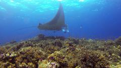 Huge Manta Ray in cleaning station with corals and fishes 2.7K - stock footage