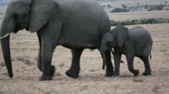 Wild elephants pass by, Masai Mara savannah, safari Kenya Stock Footage