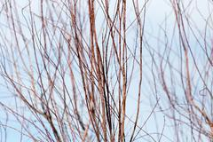 bare branches of a tree against the sky - stock photo